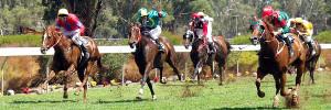 banner-racing_shot